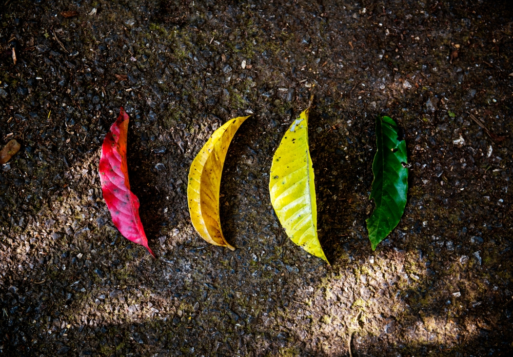 Different Colors of Leaves on the Ground